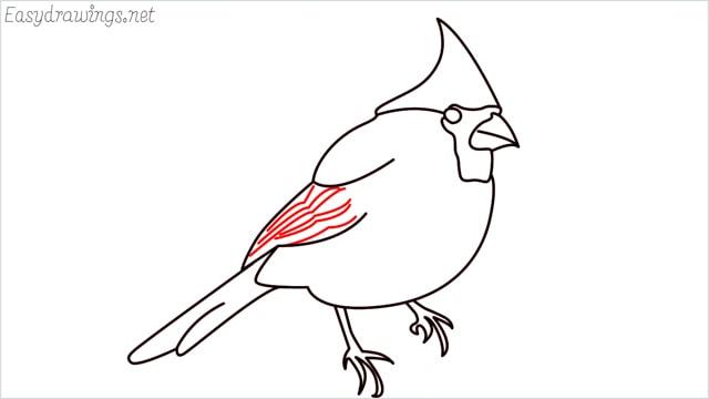 how to draw a cardinal bird step (11)