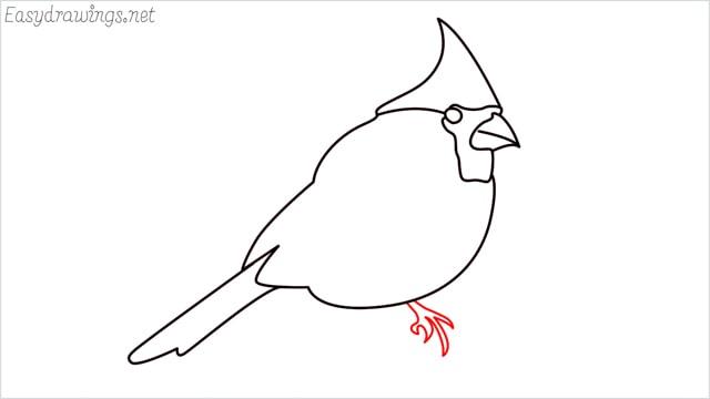how to draw a cardinal bird step (8)