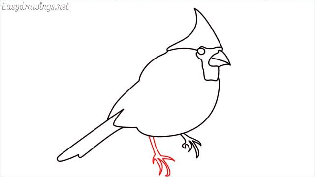 how to draw a cardinal bird step (9)