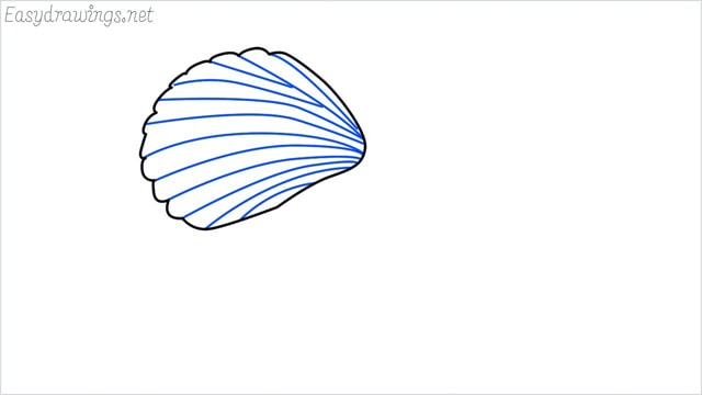 how to draw a clam shellfish step (3)