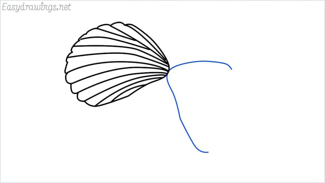 how to draw a clam shellfish step (4)