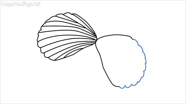 how to draw a clam shellfish step (5)