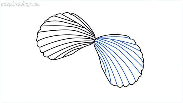 how to draw a clam shellfish step (6)