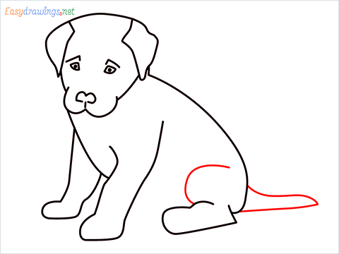 how to draw a cute dog sitting step (10)
