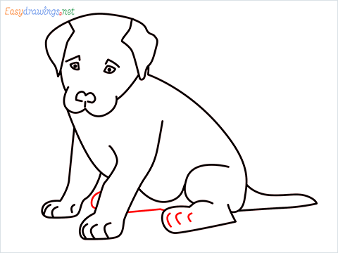 how to draw a cute dog sitting step (12)