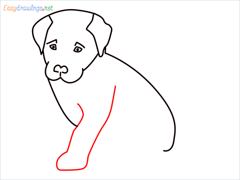 how to draw a cute dog sitting step (7)