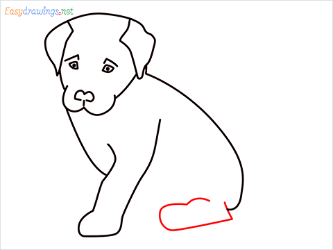how to draw a cute dog sitting step (8)