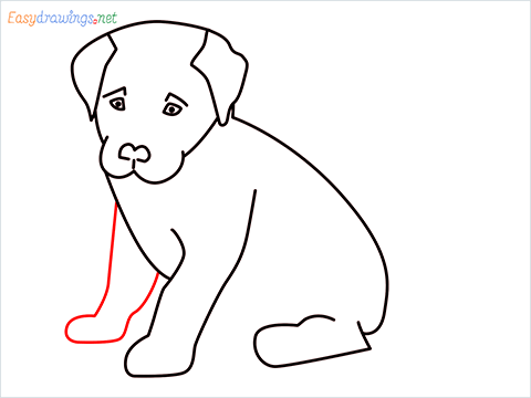 how to draw a cute dog sitting step (9)