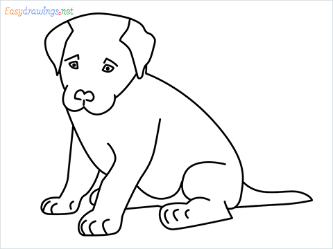 how to draw a cute dog sitting step by step for beginners