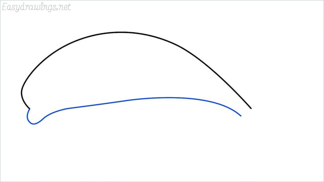 how to draw a dolphin step (2)