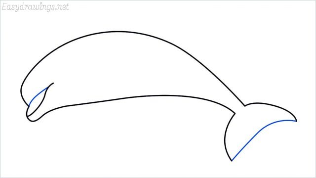 how to draw a dolphin step (4)