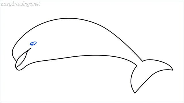 how to draw a dolphin step (5)