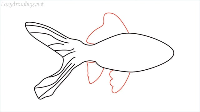 how to draw a goldfish step (5)