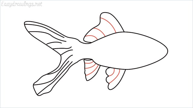 how to draw a goldfish step (6)
