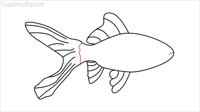 how to draw a goldfish step (7)