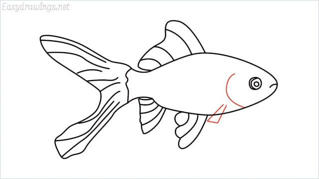 how to draw a goldfish step (9)