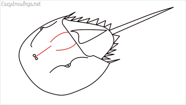 how to draw a horseshoe crab step (10)