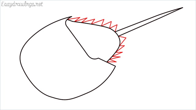 how to draw a horseshoe crab step (5)