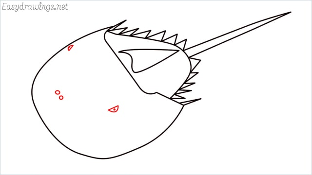 how to draw a horseshoe crab step (8)