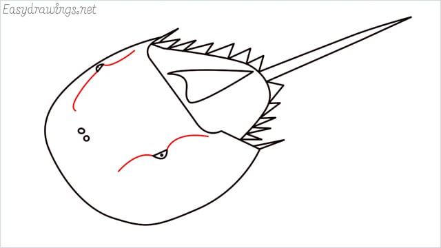 how to draw a horseshoe crab step (9)