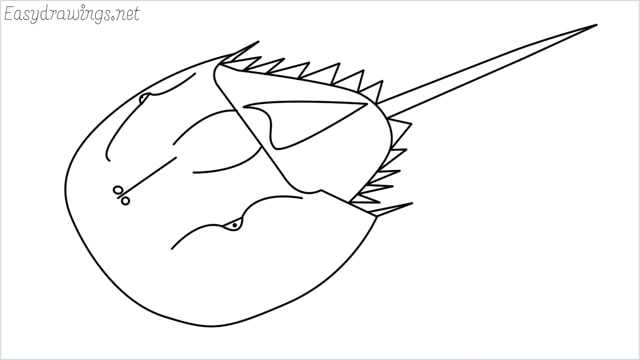 how to draw a horseshoe crab step by step