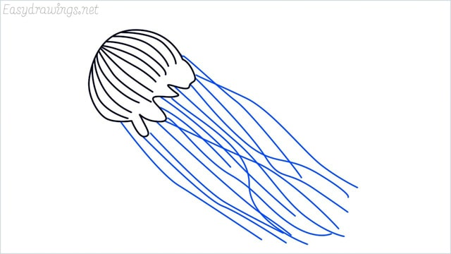 how to draw a jellyfish step (4)
