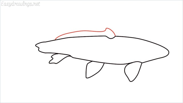 how to draw a koi fish step (4)