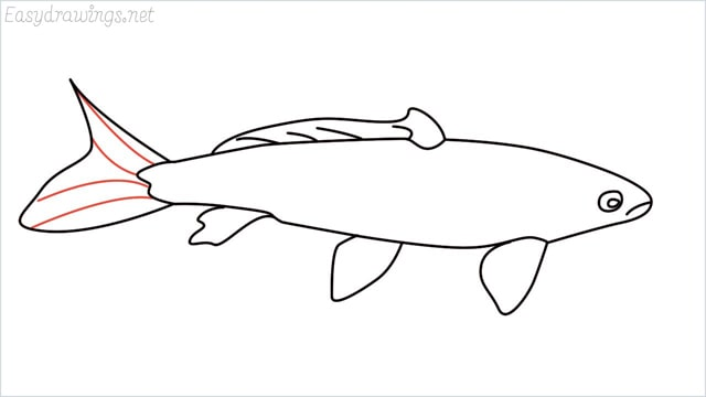 how to draw a koi fish step (8)