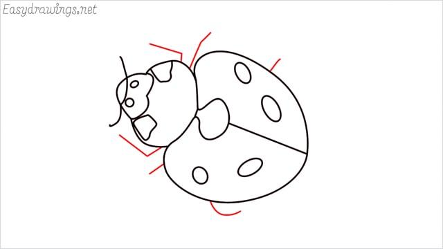 how to draw a ladybug step (10)