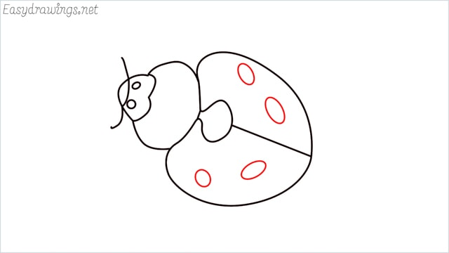 how to draw a ladybug step (8)