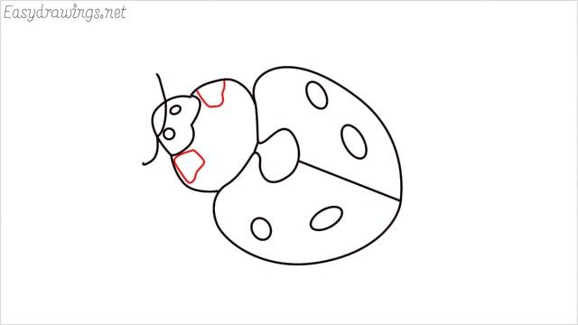 how to draw a ladybug step (9)