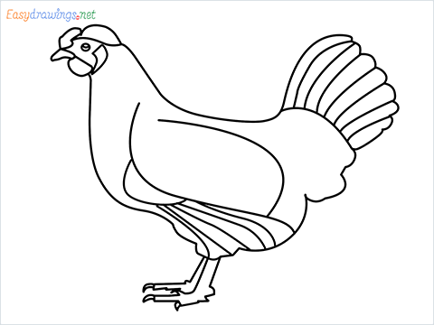 how to draw a mother hen Step by Step for Beginners