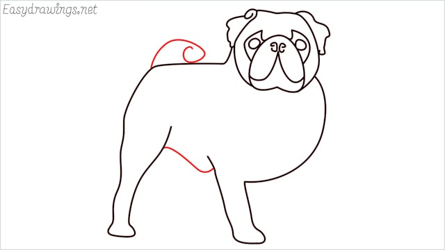 how to draw a pug step (11)