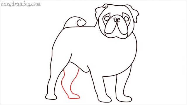 how to draw a pug step (13)