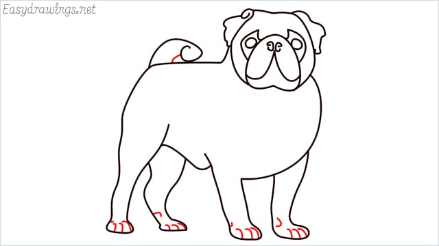 how to draw a pug step (14)