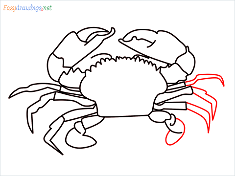 how to draw a realistic crab step (12)