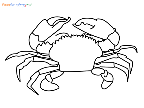 how to draw a realistic crab step by step for beginners