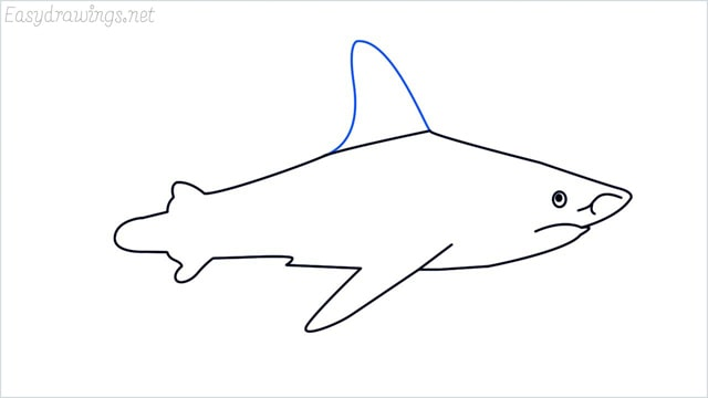 how to draw a shark step (10)