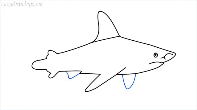 how to draw a shark step (11)