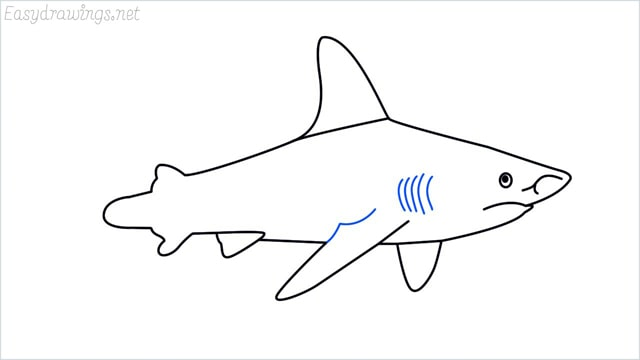how to draw a shark step (12)