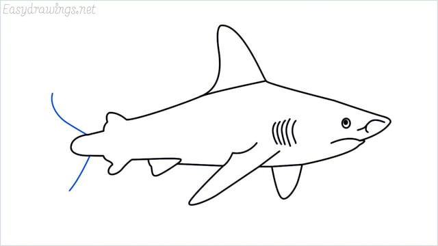 how to draw a shark step (13)