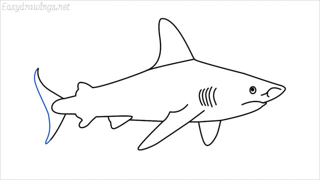 how to draw a shark step (14)