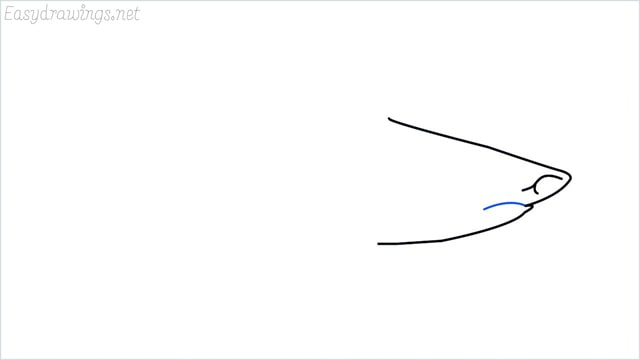 how to draw a shark step (4)