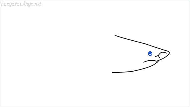 how to draw a shark step (5)