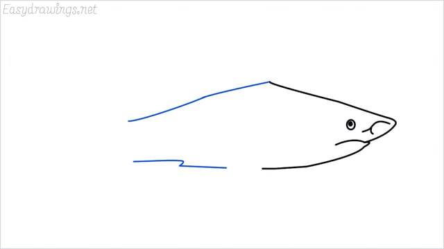 how to draw a shark step (6)