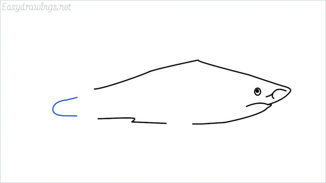 how to draw a shark step (7)