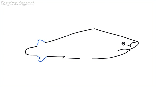 how to draw a shark step (8)