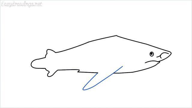 how to draw a shark step (9)