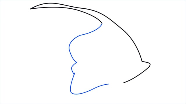 how to draw a spadefish step (4)