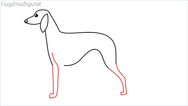 how to draw a suluki dog step (6)